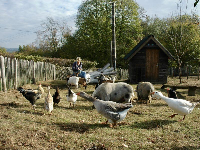 Kinderboerderij Morvan Rustique, glamping.nl