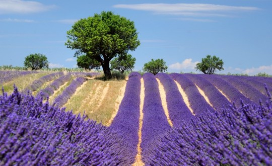 5 mooie steden in de Provence