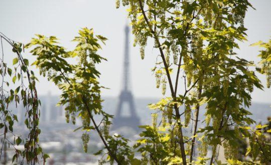Stedentip: Parijs