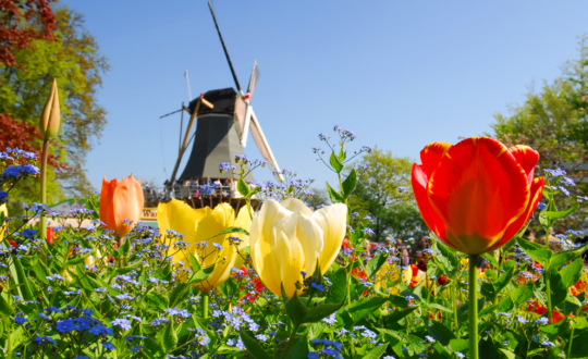 Ertussenuit in Nederland? Deze accommodaties staan op jou te wachten!