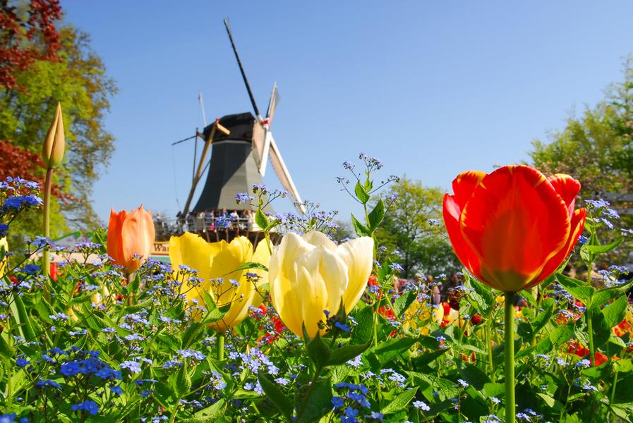 luxe kamperen in nederland