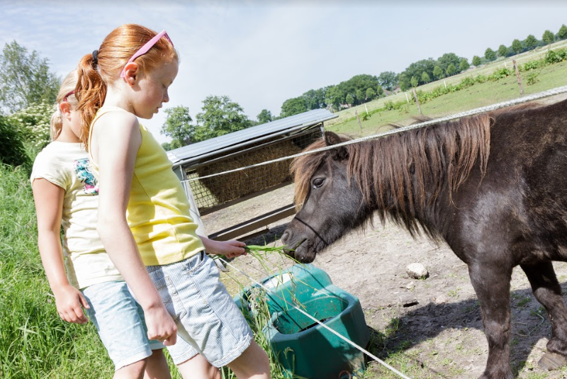de vossenburcht pony