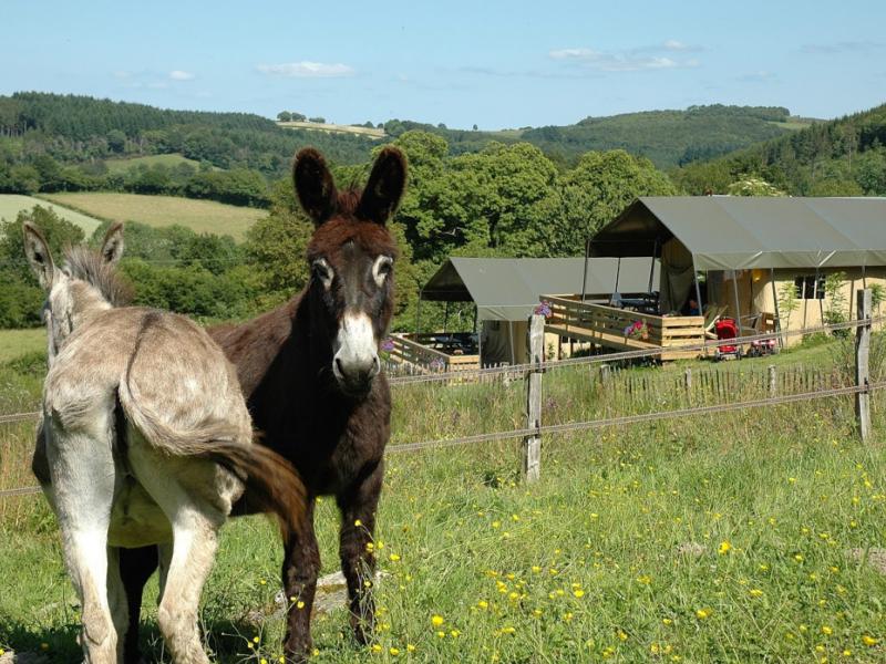 morvan rustique ezels