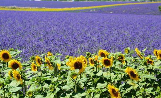 Glamping Provence