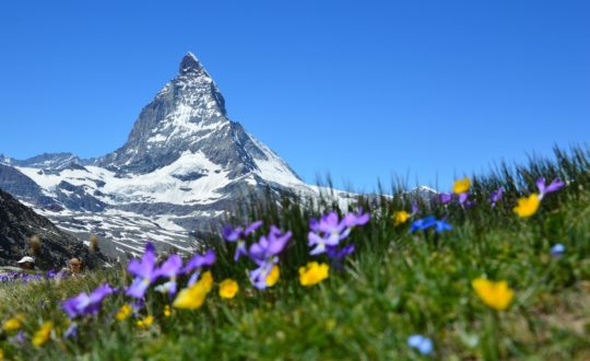 Glamping Zwitserland