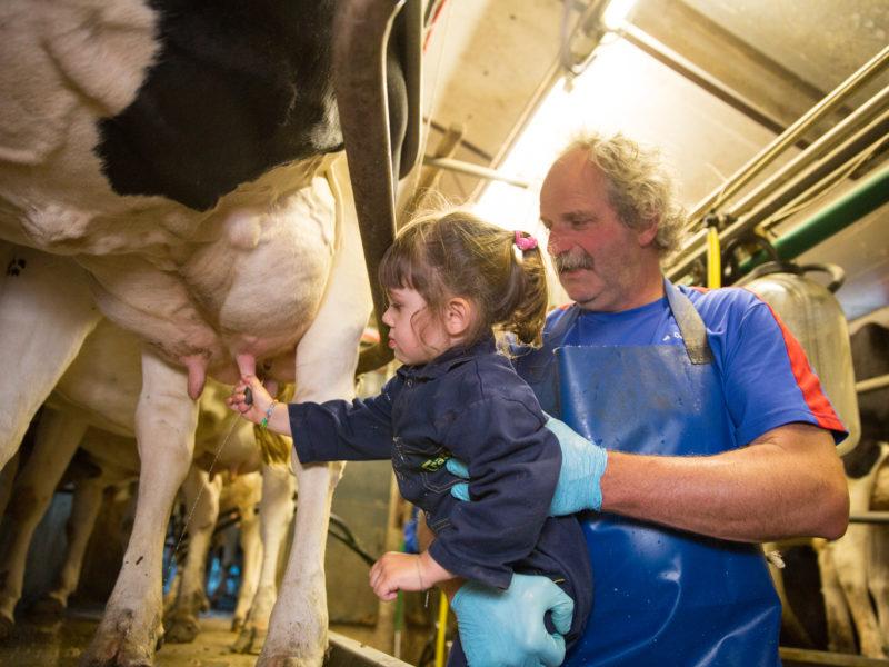 FarmCamps Brandenhorst meehelpen op de boerderij