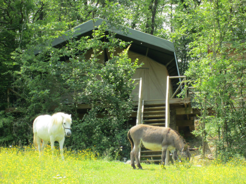 Ezel enPony voor de safaritent van La Douce France