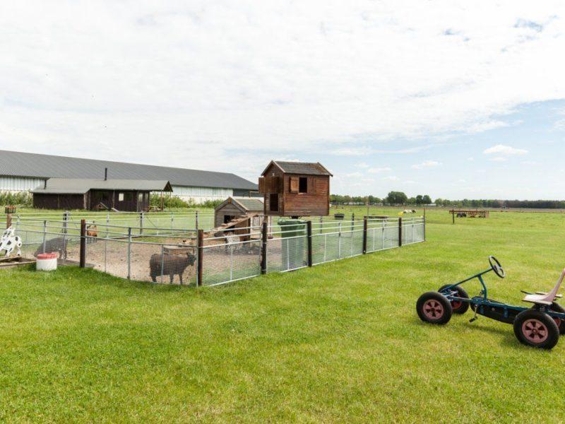 De Brabantse Hei geitjes en schaapjes