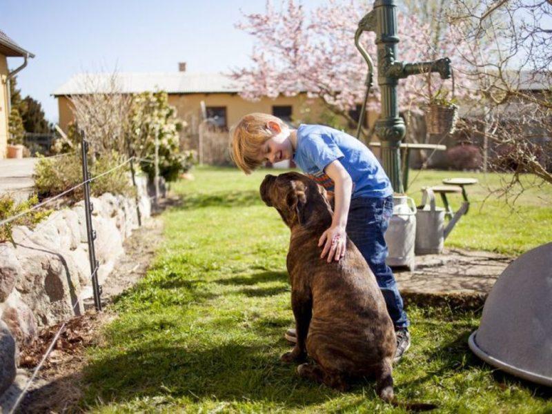 Dinserhof Collection, knuffelen met de hond