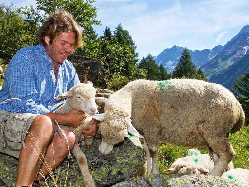 Wallis Collection, Man met schapen