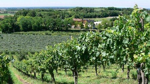 Agriturismo Le Sorgive e Le Volpi wijngaarden