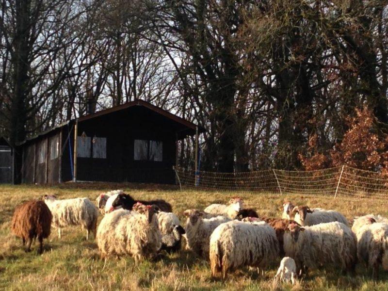La Grange du Bost - schaapjes in wei - Glamping