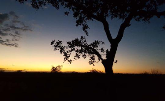 Mijn glampingervaring in Zuid-Afrika