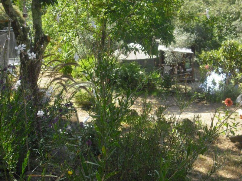 Natuurhuisje in Penela