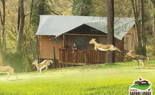 Cerza Safari Lodges - Glamping.nl
