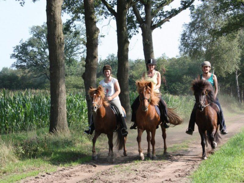Paardrijden omgeving - Borken am See, glamping.nl
