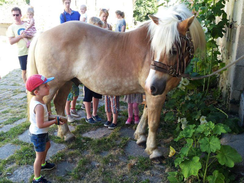 Pony rijden - Abbaye du Palais - Glamping