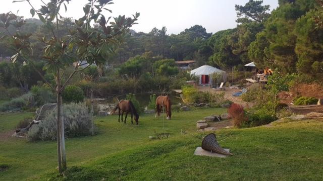 Omgeving Yurt, paarden - Quinta Ecosophia, glamping.nl