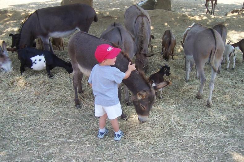 Kinderboerderij camping - Lou Pignada, glamping.nl