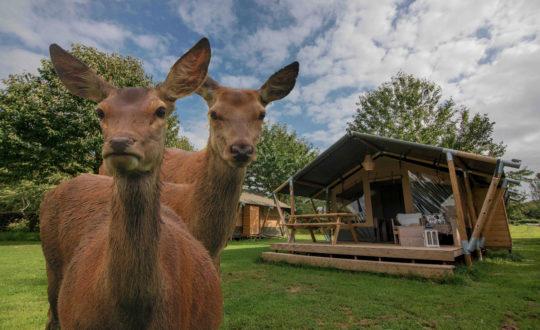 Camping- & Hertenboerderij De Weerd - Glamping.nl