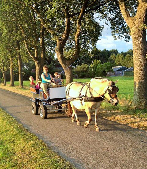 Rondje met paard - Hendriks Wijkje - Glamping