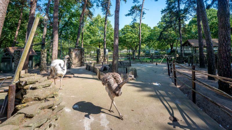 Dieren camping - Familiepark Goolderheide, Glamping.nl