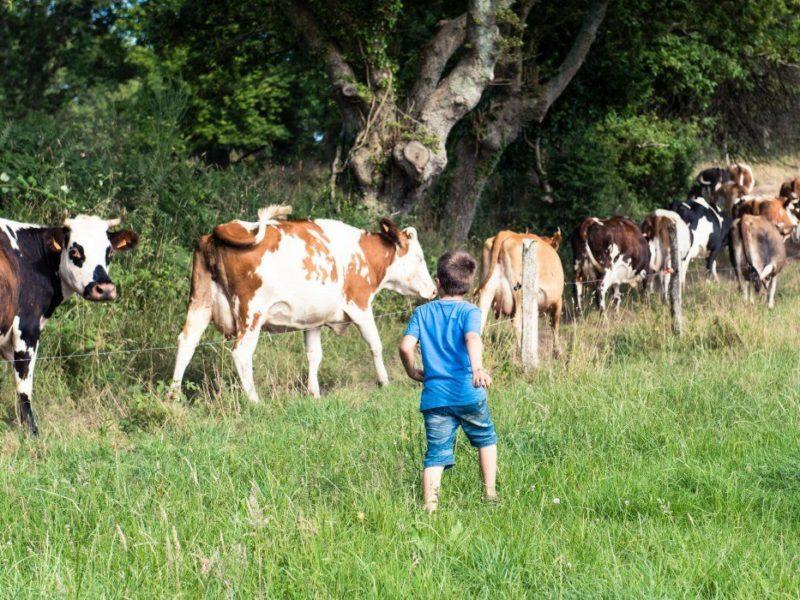 boerderij frankrijk