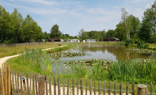 Glamping with a view op 't Rheezerwold
