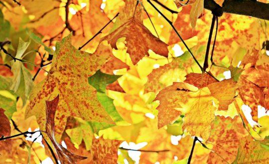 Glampen in een boomhut in de herfstvakantie