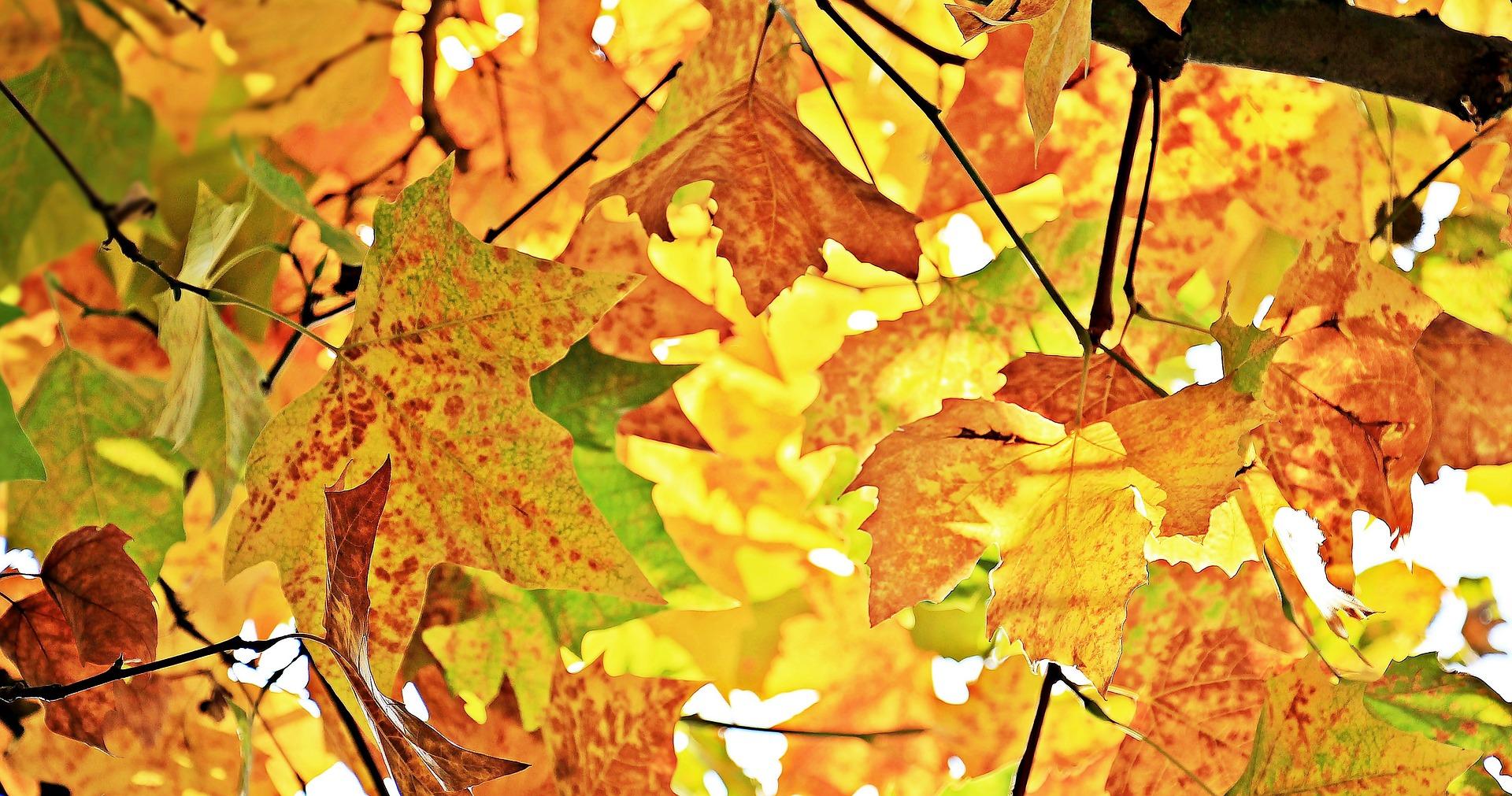 Herfst blog glamping