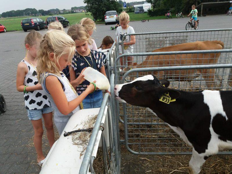 Koeien voeren - Glamping De Vos