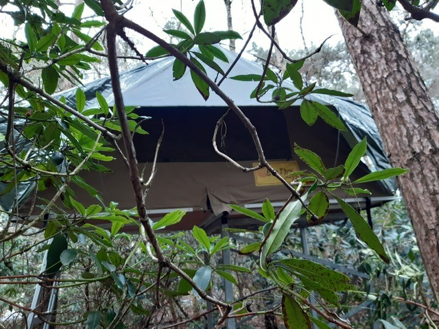 Tree-lodge